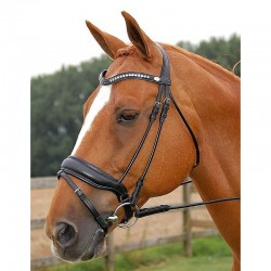 Testiera capezzina irlandese larga opaca Dy'on - Dressage collection